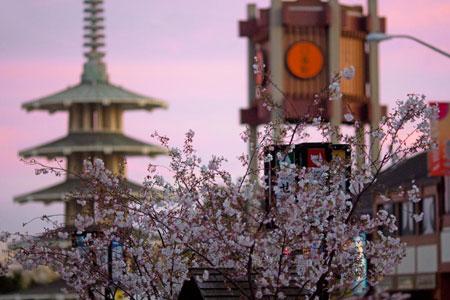 San Francisco's Japan Town